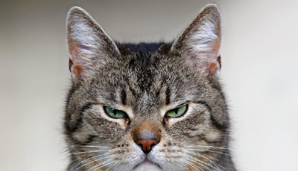 Grimmige Katze © farbkombinat, stock.adobe.com