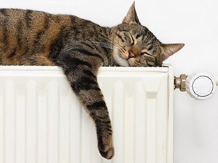 Katze liegt auf der Heizung © erikzunec, Fotolia